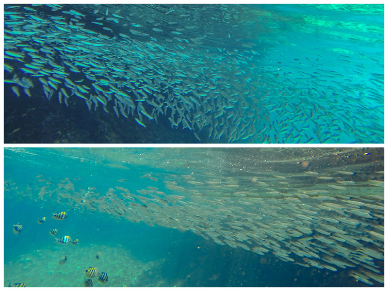 School of fish at Secret Beach